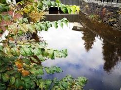 Refleksjoner av tretopper i vann