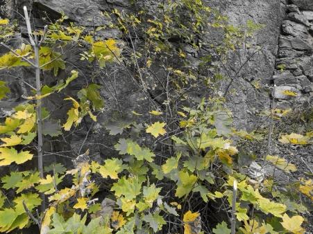 autumn5_colorsplash