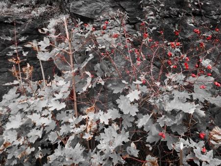 autumn6_colorsplash